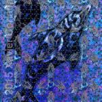 bottlenosed-dolphin-xc2015
