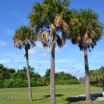 palmtree765