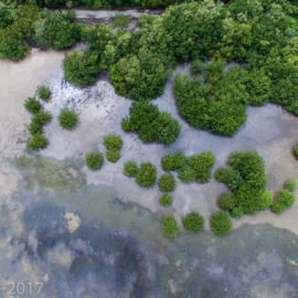FLORIDA IS… Mangroves