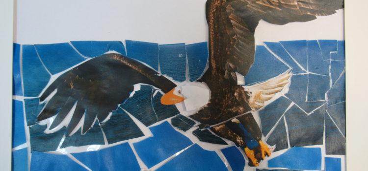 Florida is the Bald eagle