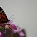 Olivia_Dingman_One_More_Taste_Of_Nectar