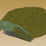 valeria's gohper turtle